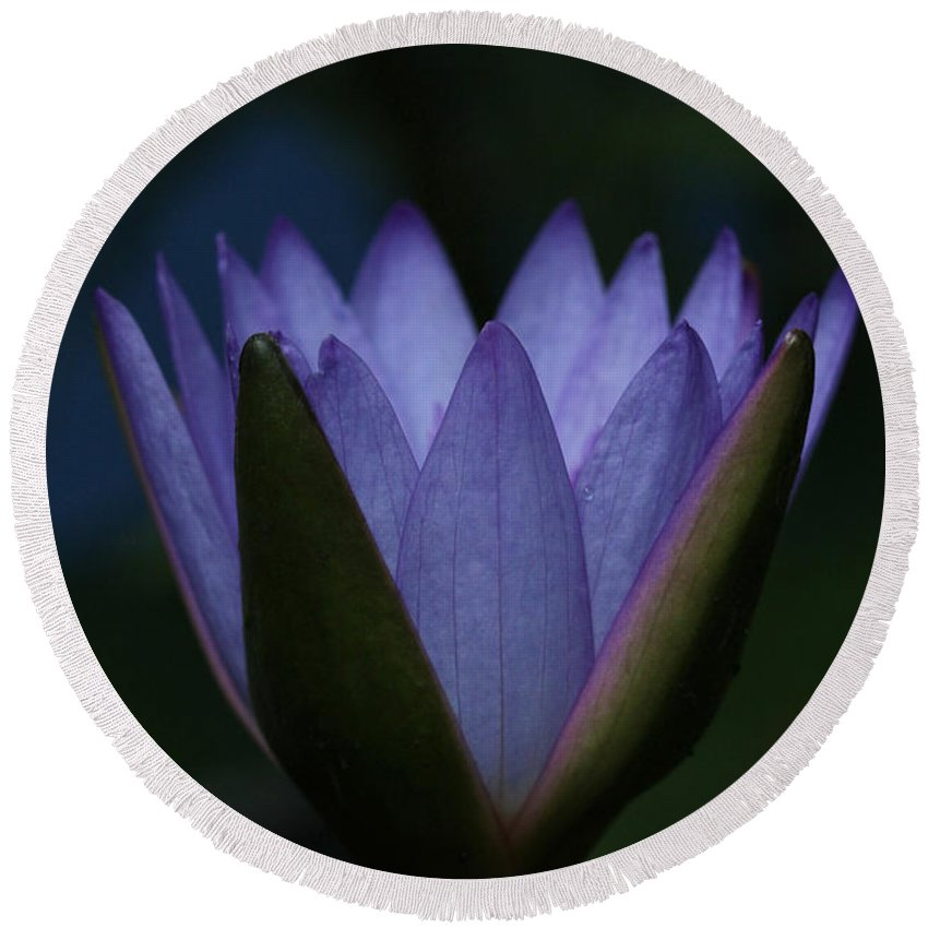 Royal Purple Water Lily Round Beach Towel featuring the photograph Midnight Water Lily by Judy Whitton