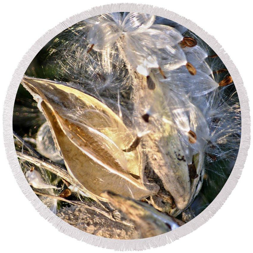 Milkweed Canvas Prints Round Beach Towel featuring the digital art Milkweed II by Danielle Summa
