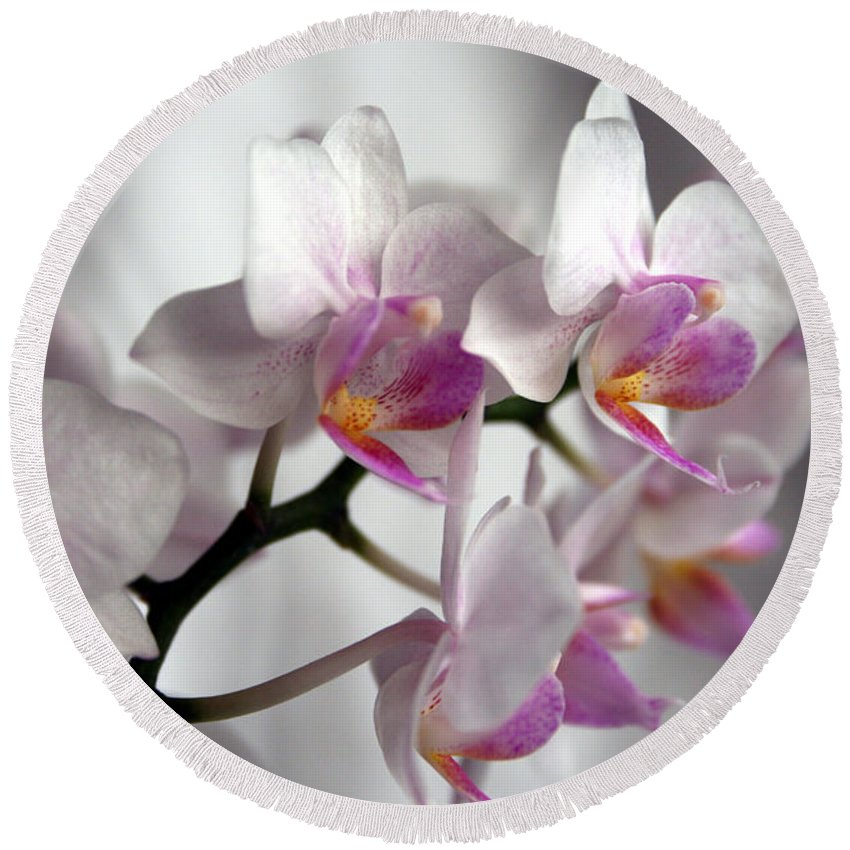 Mini Phalaenopsis Round Beach Towel featuring the photograph Mini Orchids 1 by Marna Edwards Flavell