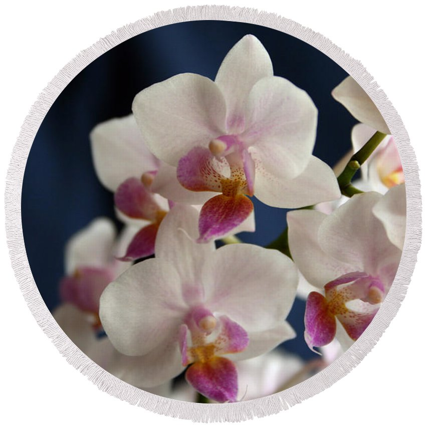 Mini Phalaenopsis Round Beach Towel featuring the photograph Mini Orchids 3 by Marna Edwards Flavell