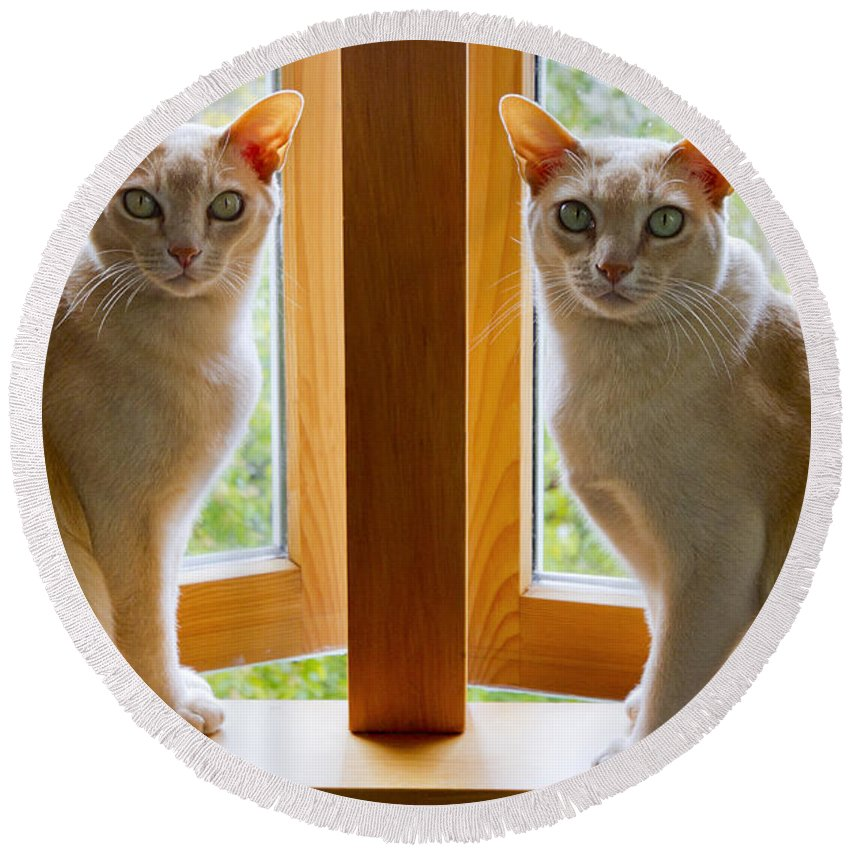 Cats Round Beach Towel featuring the photograph Mirrored Cats by Jenny Setchell