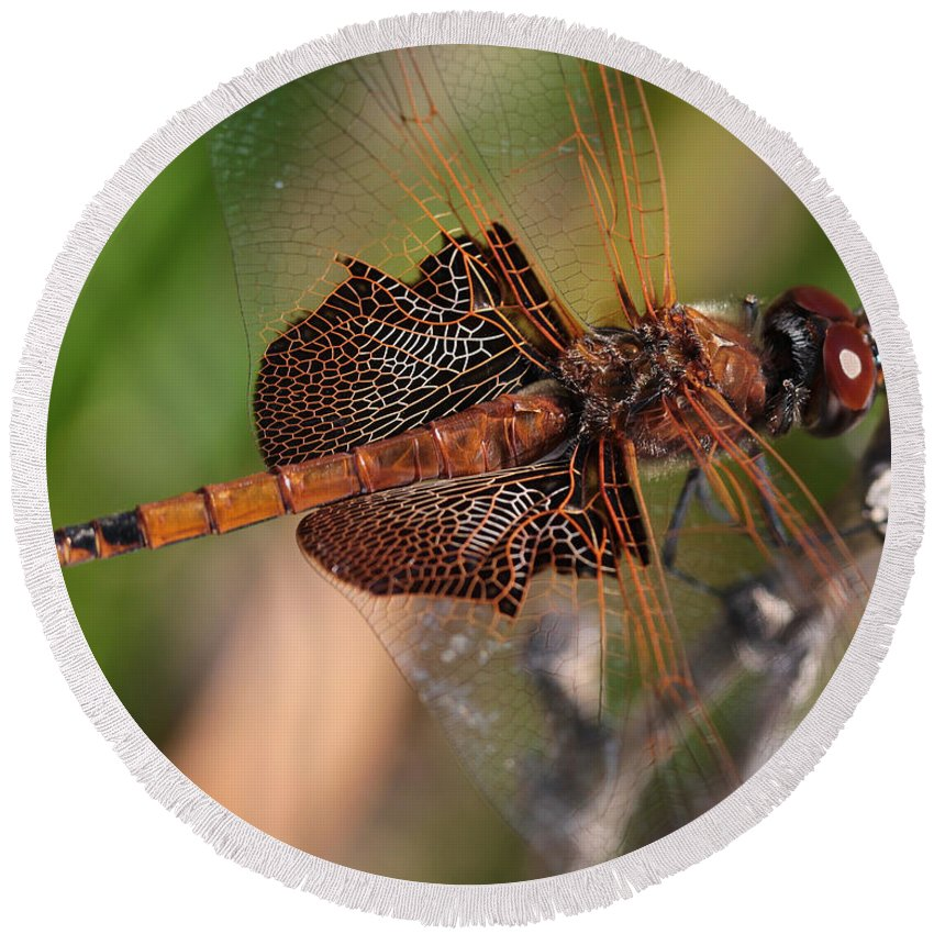 Dragonfly Round Beach Towel featuring the photograph Mocha And Cream Dragonfly Profile by Kenny Glotfelty