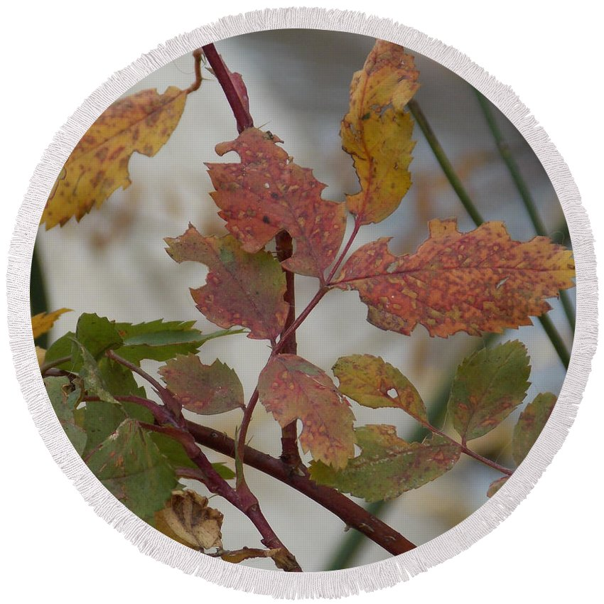 Round Beach Towel featuring the photograph Molting Leaves by Brent Dolliver