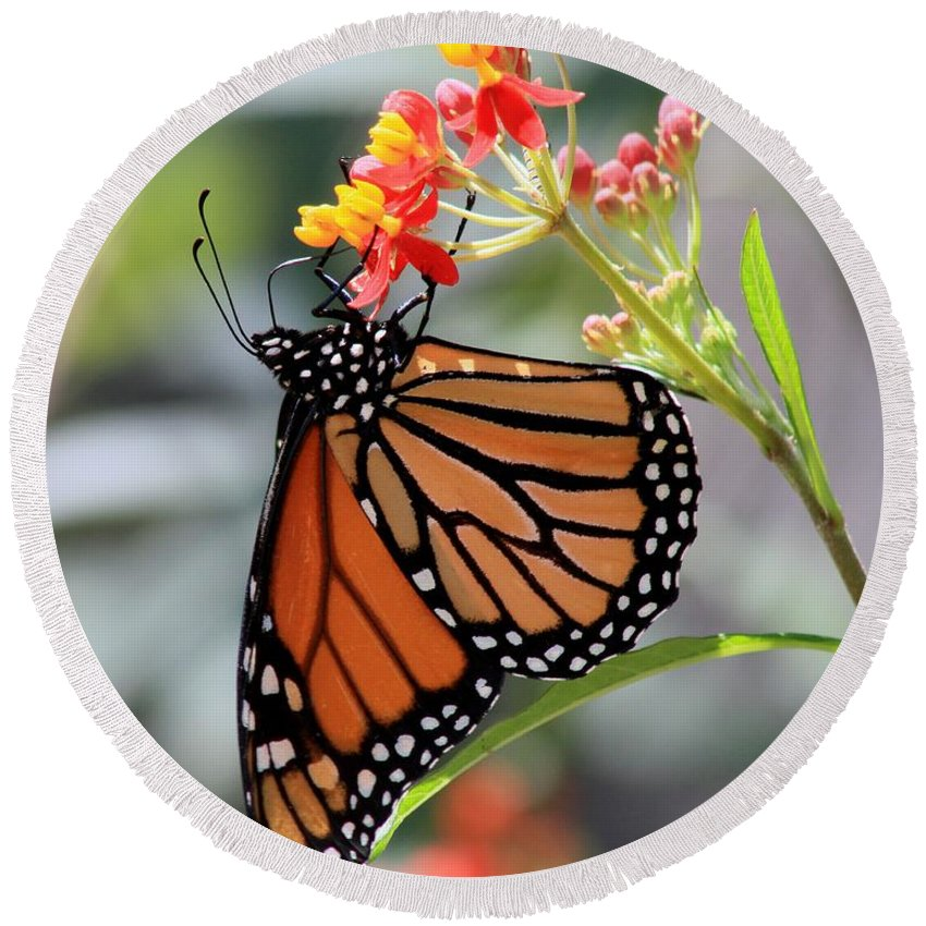 Texas Round Beach Towel featuring the photograph Monarch by Ashley M Conger