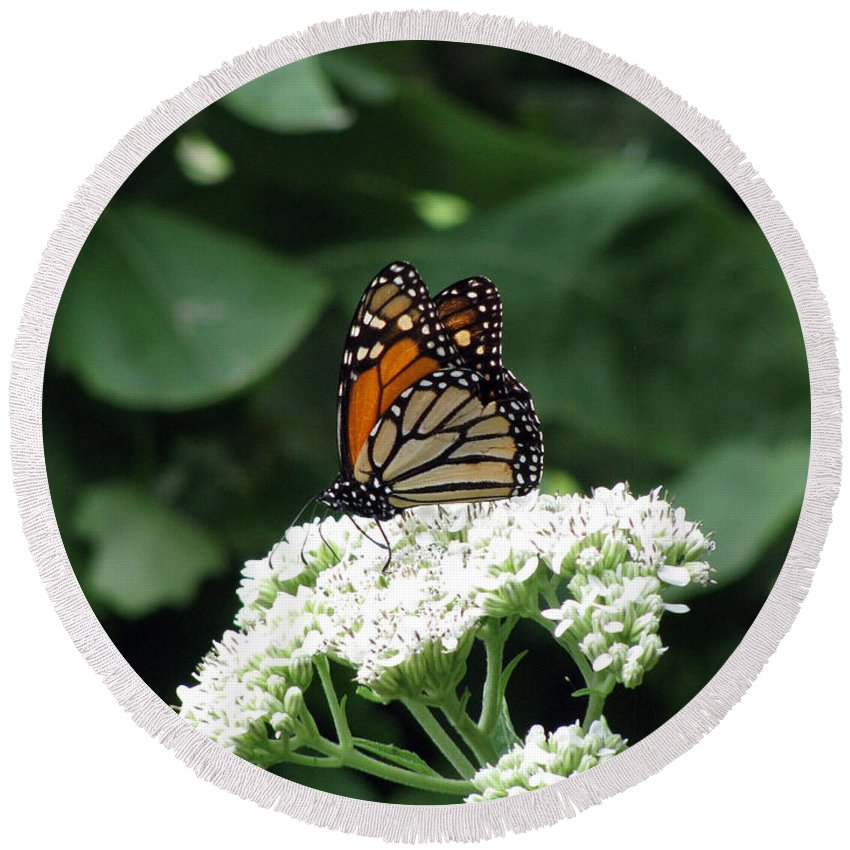 Butterfly Round Beach Towel featuring the photograph Monarch Butterfly 45 by Pamela Critchlow