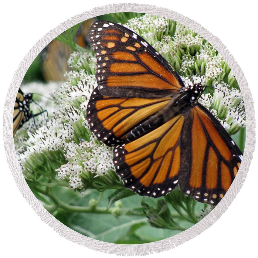 Butterfly Round Beach Towel featuring the photograph Monarch Butterfly 52 by Pamela Critchlow
