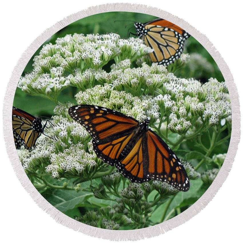 Butterfly Round Beach Towel featuring the photograph Monarch Butterfly 54 by Pamela Critchlow