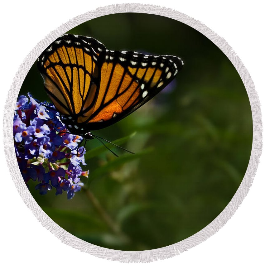 Monarch Butterfly Round Beach Towel featuring the photograph Monarch Butterfly by Onyonet Photo Studios