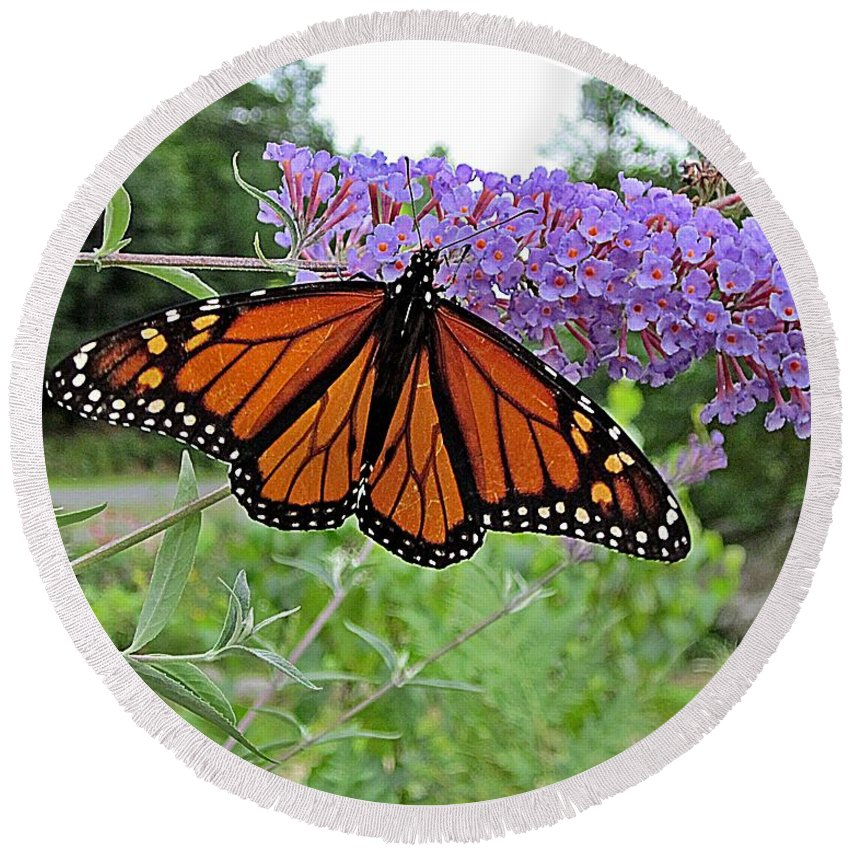 Monarch Butterflies Round Beach Towel featuring the photograph Monarch Under Flowers by MTBobbins Photography