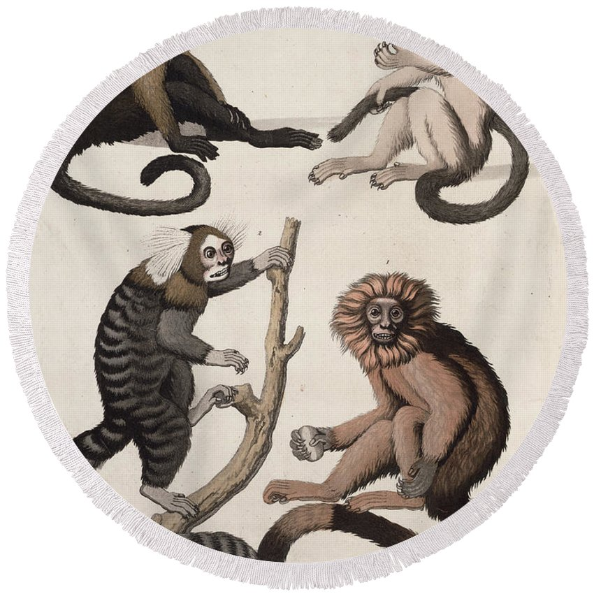 Animal Round Beach Towel featuring the drawing Monkeys by Vittorio Raineri