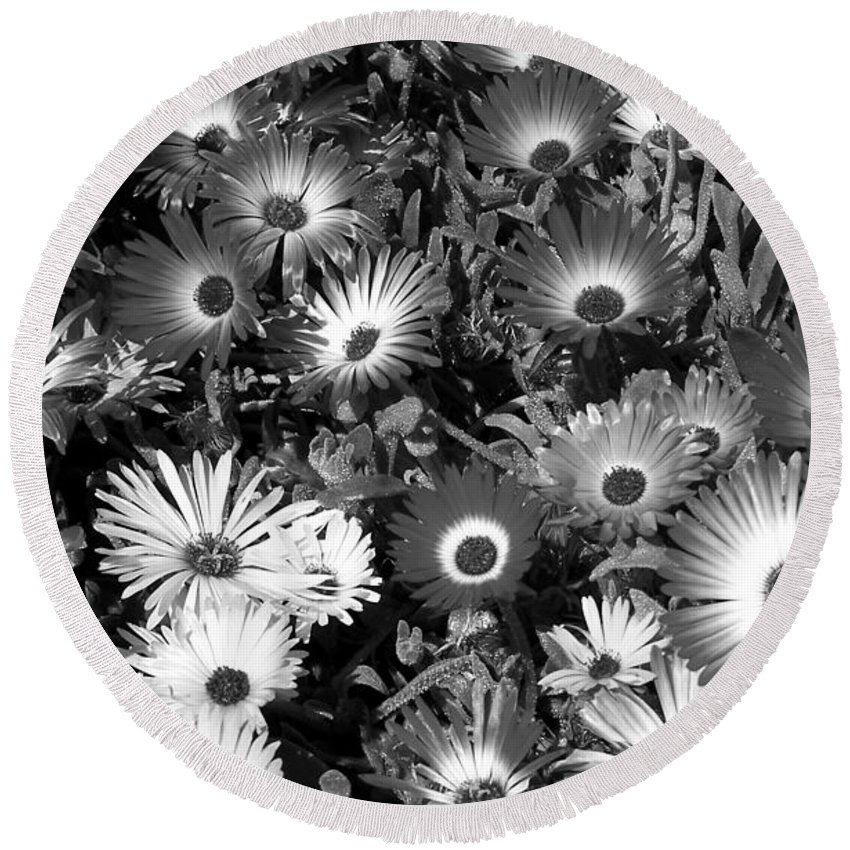 Monochrome Asters Round Beach Towel featuring the photograph Monochrome Asters by Chalet Roome-Rigdon