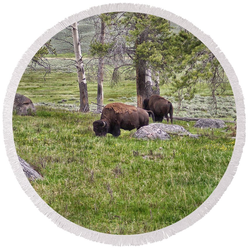 Animals Round Beach Towel featuring the photograph Montana Buffalo Grazing by Thomas Woolworth