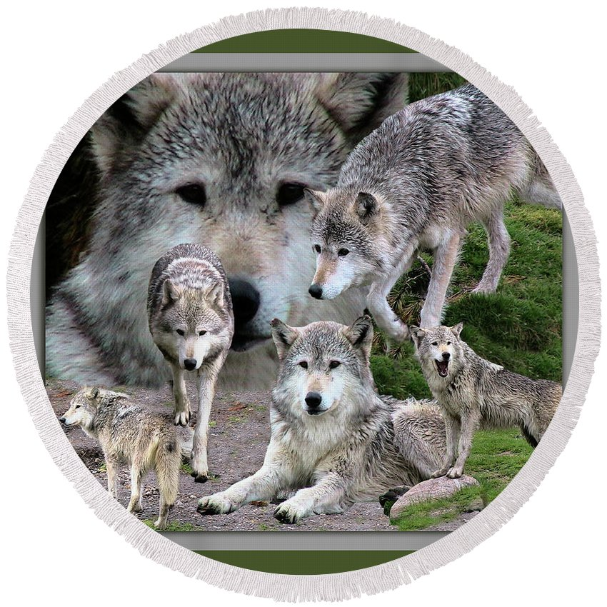 Animals Round Beach Towel featuring the photograph Montana Wolf Pack by Thomas Woolworth