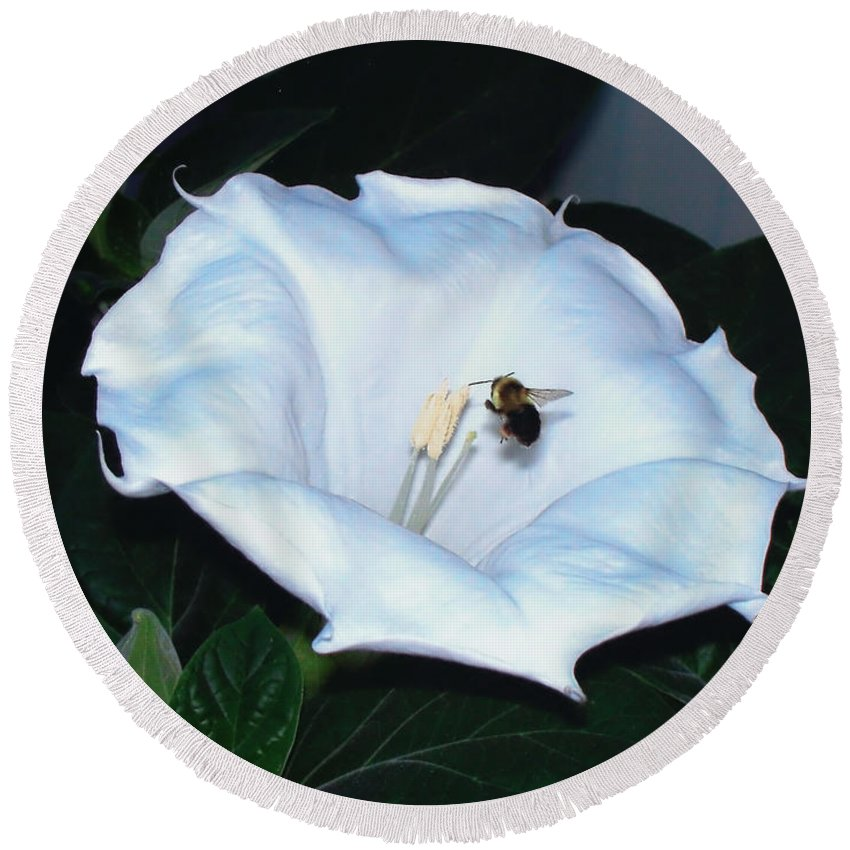 Moon Flower Round Beach Towel featuring the photograph Moon Flower by Thomas Woolworth