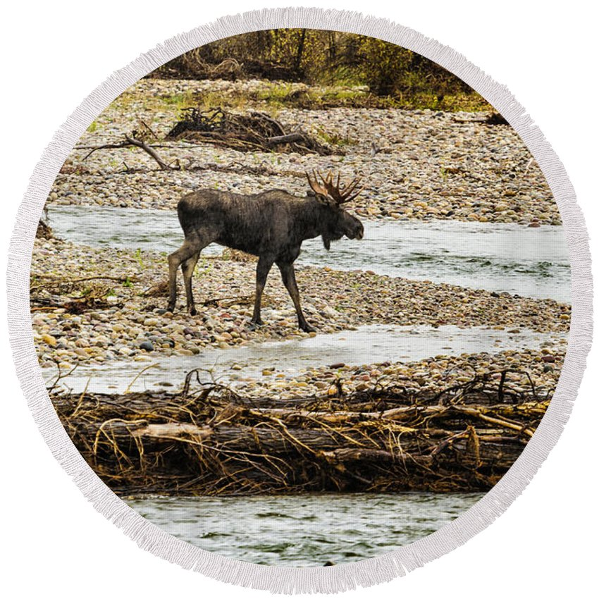 Moose Round Beach Towel featuring the photograph Moose Crossing River No. 1 - Grand Tetons by Belinda Greb