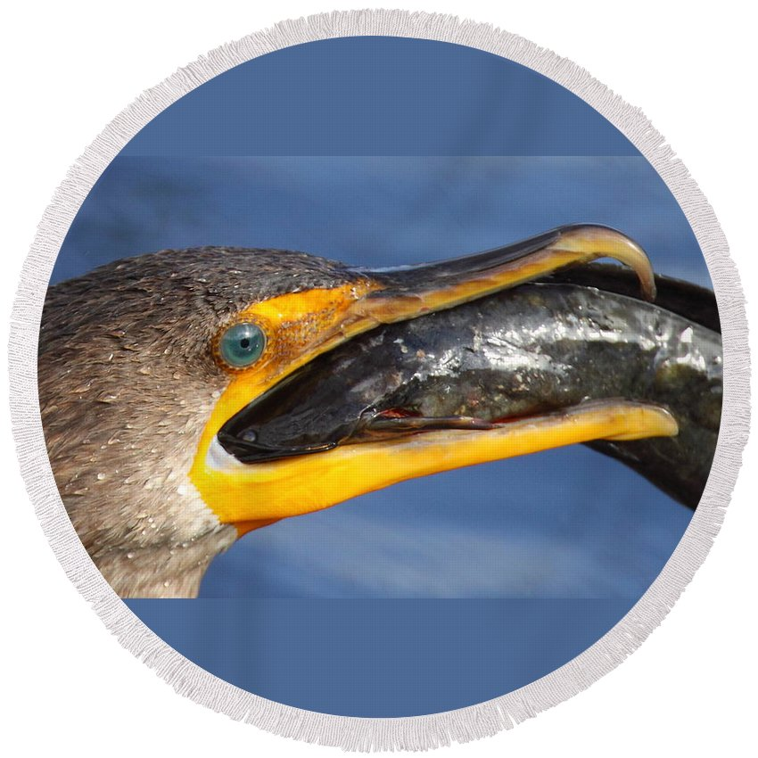 Cormorant Round Beach Towel featuring the photograph More Than A Mouthfull by Bruce J Robinson