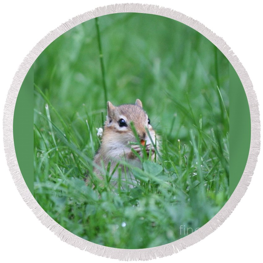 Chipmunk Round Beach Towel featuring the photograph Morning Chipmunk Breakfast by Neal Eslinger