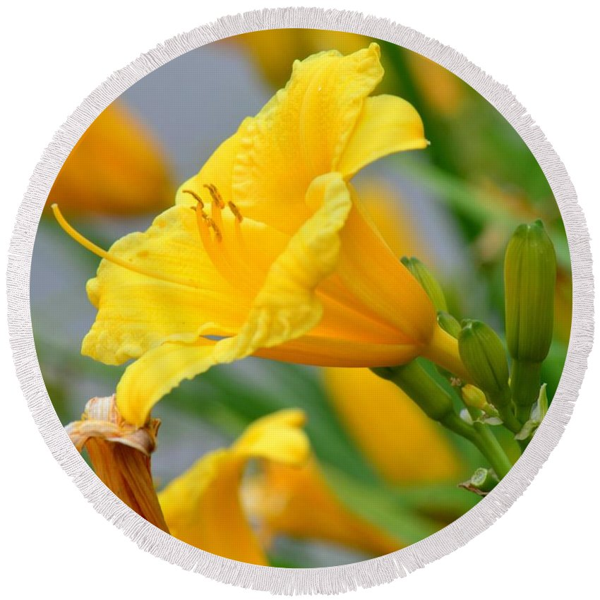Morning Daylilies Round Beach Towel featuring the photograph Morning Daylilies by Maria Urso