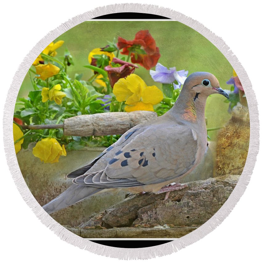 Nature Round Beach Towel featuring the photograph Morning Dove With Pansies by Debbie Portwood