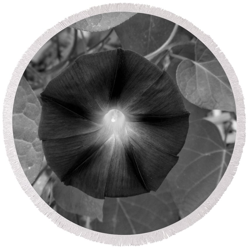 Morning Glory Round Beach Towel featuring the photograph Morning Glory 05 by Thomas Woolworth