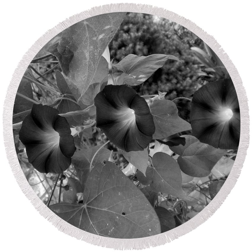 Morning Glory Round Beach Towel featuring the photograph Morning Glory 06 by Thomas Woolworth