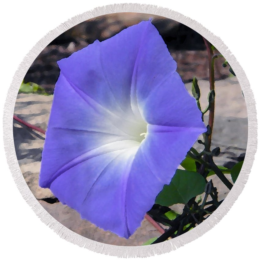 Flowers Round Beach Towel featuring the photograph Morning Glory by Chris Busch