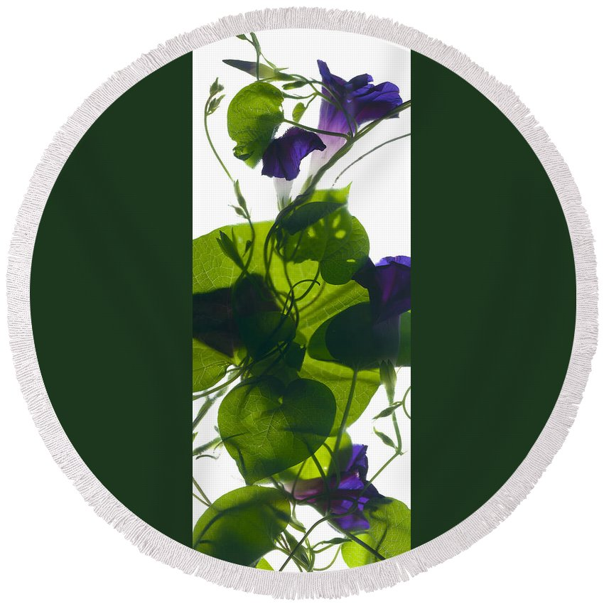 Morning Glory Round Beach Towel featuring the digital art Morning Glory Rising by Julia McLemore