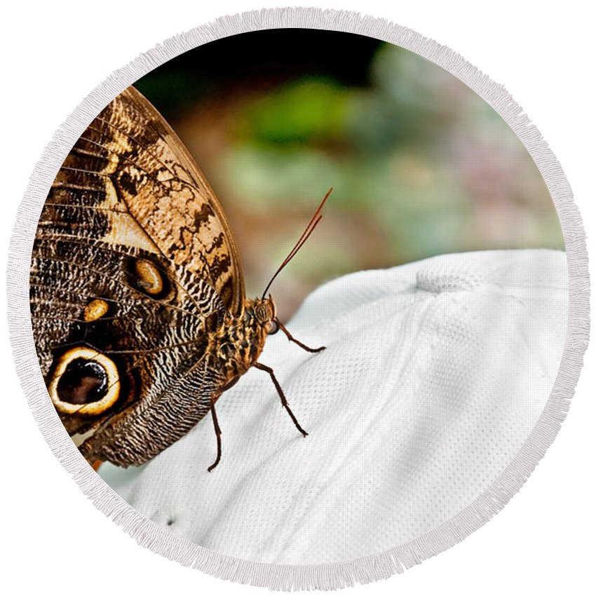 Butterfly Round Beach Towel featuring the photograph Morphos Butterfly On White Baseball Cap Art Prints by Valerie Garner