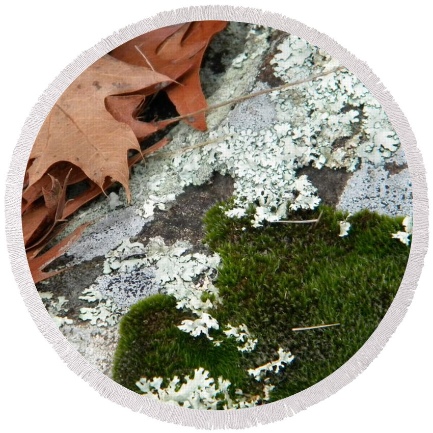 Moss Round Beach Towel featuring the photograph Mossy Leaves by Nathanael Smith