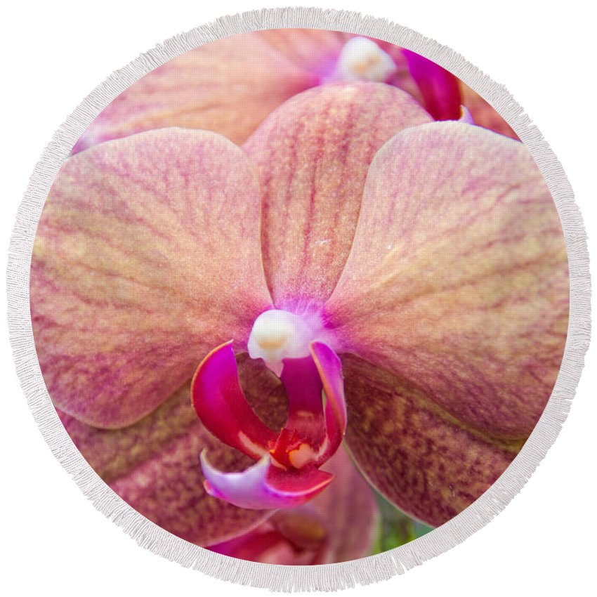 Moth Orchid Round Beach Towel featuring the photograph Moth Orchid by Jemmy Archer