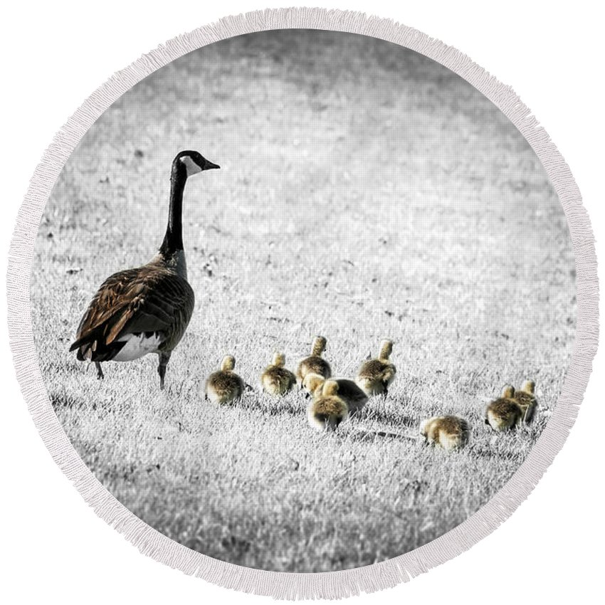 Goose Round Beach Towel featuring the photograph Mother Goose by Elena Elisseeva