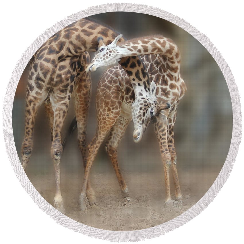 Giraffe Round Beach Towel featuring the photograph Mother's Love by TN Fairey