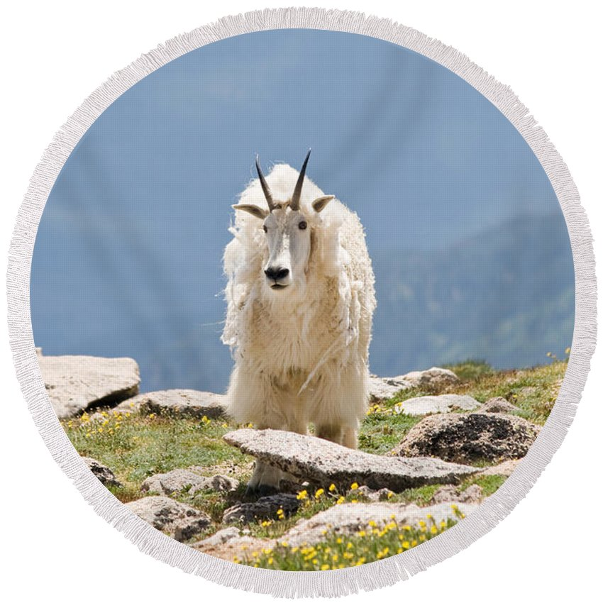 Mountain Goat Round Beach Towel featuring the photograph Mountain Goat Portrait by Jaci Harmsen