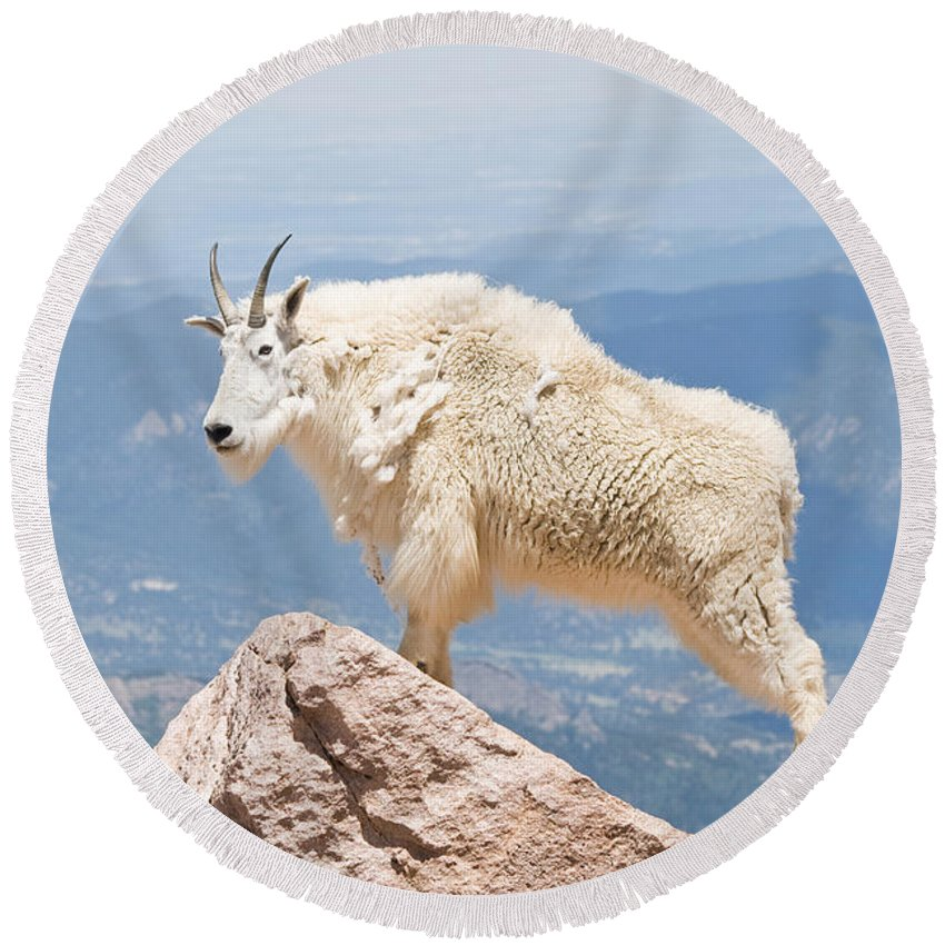Mountain Goat Round Beach Towel featuring the photograph Mountain Goat Up High by Jaci Harmsen