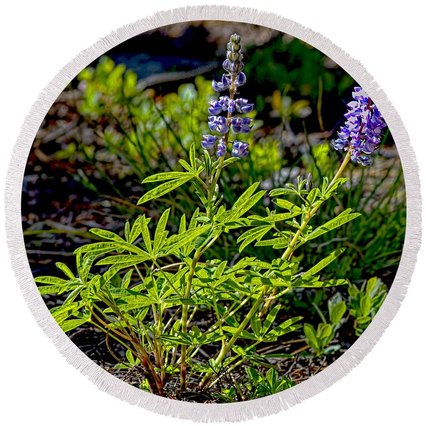 Mountain Lupine Round Beach Towel featuring the photograph Mountain Lupine by Gary Holmes