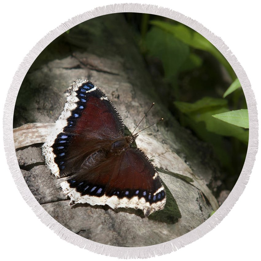Butterfly Round Beach Towel featuring the photograph Mourning Cloak Butterfly by Christina Rollo