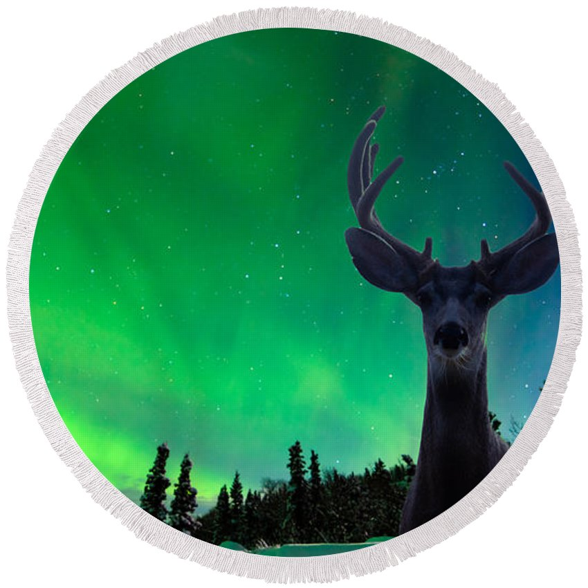 Animal Round Beach Towel featuring the photograph Mule Deer And Aurora Borealis Over Taiga Forest by Stephan Pietzko
