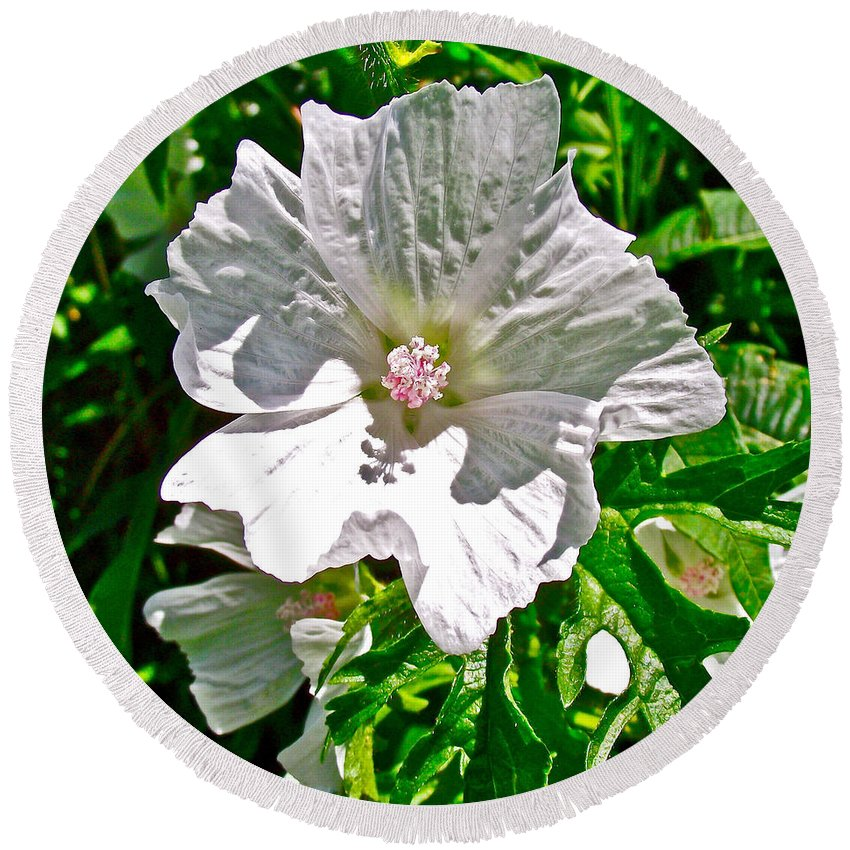 Musk Mallow Along Trail To Cap Gaspe In Forillon National Park Round Beach Towel featuring the photograph Musk Mallow Along Trail To Cap Gaspe In Forillon National Park-quebec by Ruth Hager