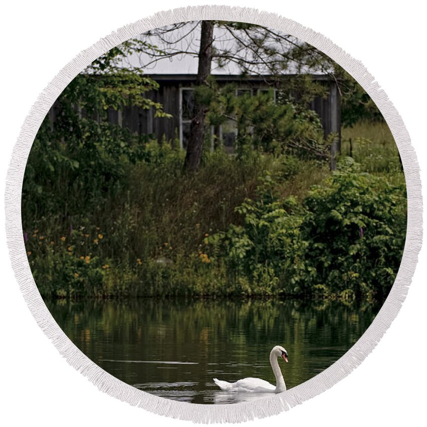 Mute Swan Round Beach Towel featuring the photograph Mute Swan Pictures 199 by World Wildlife Photography