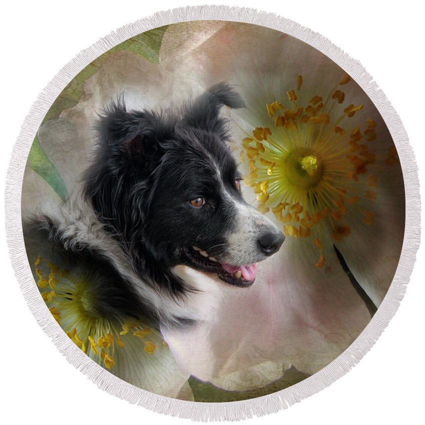 Dogs Round Beach Towel featuring the photograph My Little Petunia by John Herzog