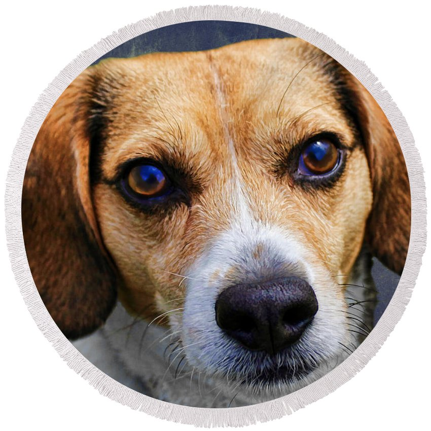 Beagle Round Beach Towel featuring the photograph My Name Is Moose by Barbara McMahon