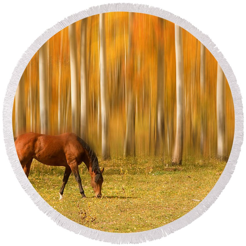 Horse Round Beach Towel featuring the photograph Mystic Autumn Grazing Horse by James BO Insogna