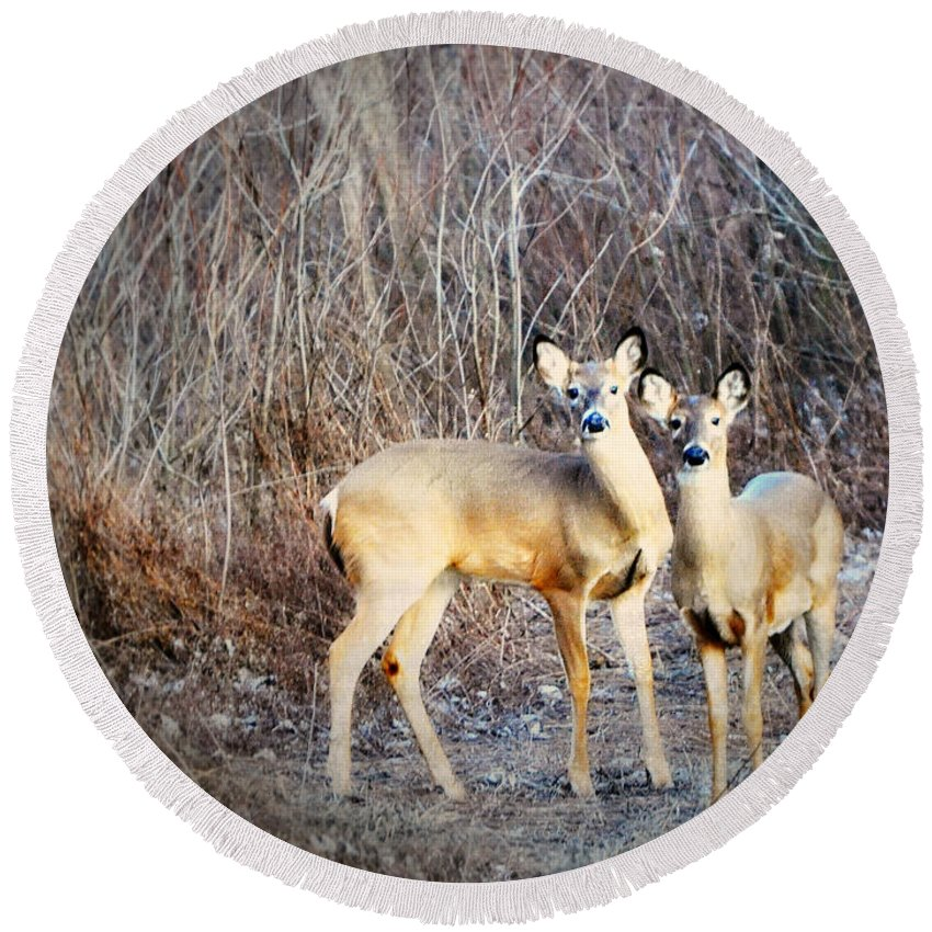 Deer Round Beach Towel featuring the photograph Mystic Duo by Marty Koch