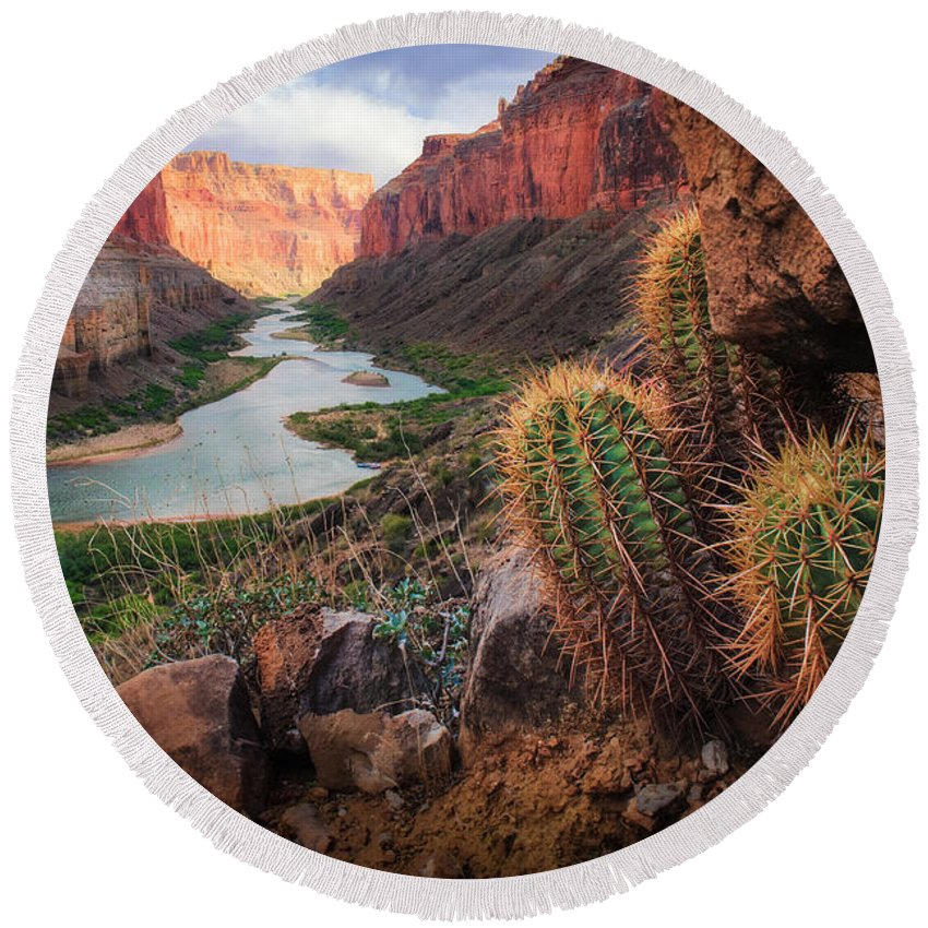 America Round Beach Towel featuring the photograph Nankoweap Cactus by Inge Johnsson