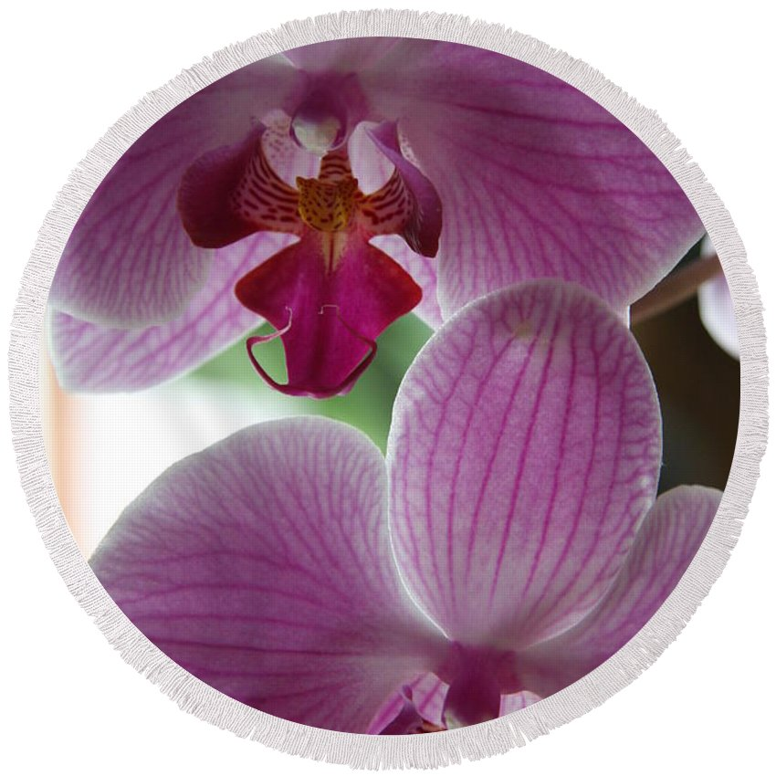 Orchid Round Beach Towel featuring the photograph Neat Faces by Christiane Schulze Art And Photography