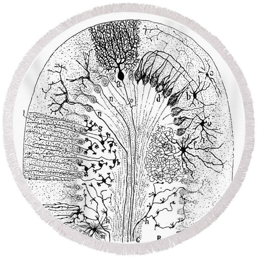 1894 Round Beach Towel featuring the photograph Nerve Cells, 1894 by Granger