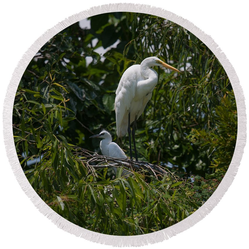 Egret Round Beach Towel featuring the photograph Nest Lookout by Dale Powell