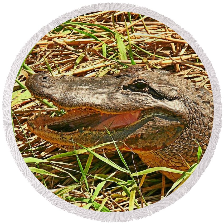 Alligator Round Beach Towel featuring the photograph Nesting Alligator by Robert Brown