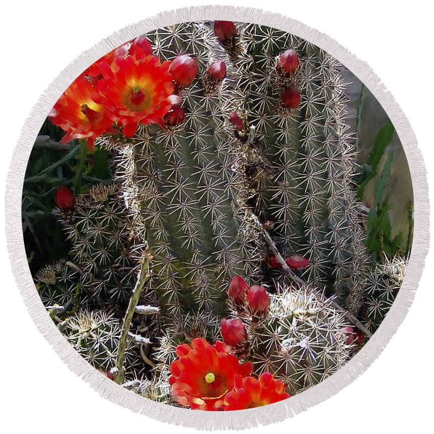 Cactus Round Beach Towel featuring the photograph New Mexico Cactus by Kurt Van Wagner