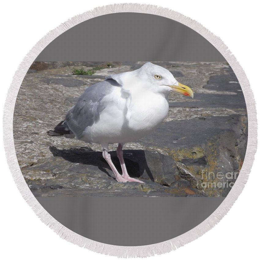 Sea Gull Round Beach Towel featuring the photograph New Quay Gull 1 by John Williams